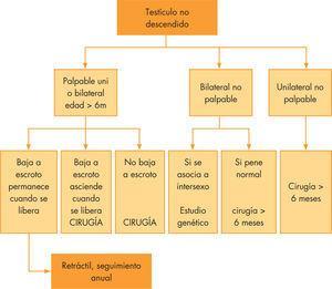 Algoritmo terapéutico del maldescenso testicular.