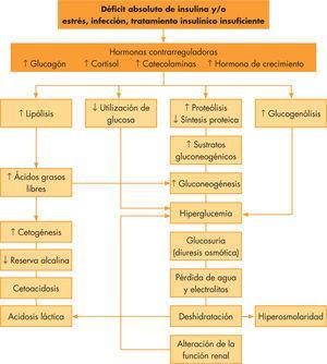 Fisiopatología de la cetoacidosis diabética.