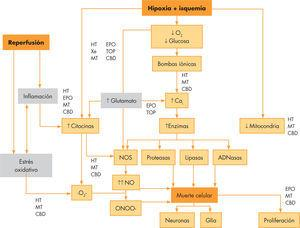 Fisiopatología de la encefalopatía hipóxico-isquémica neonatal. En gris se resalta la «tríada mortal». Se destaca en qué punto actuarían las diversas estrategias neuroprotectoras. CBD: cannabidiol; EPO: eritropoyetina; HT: hipotermia terapéutica; MT: melatonina; TOP: topiramato; Xe: xenón.