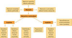 Clasificación de los diferentes tipos de memoria.