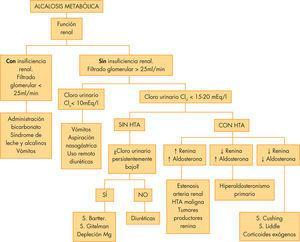 Etiología y algoritmo diagnóstico de la alcalosis metabólica. HTA: hipertensión arterial.