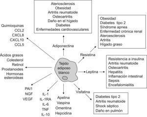 Representación esquemática de las múltiples funciones del tejido adiposo blanco y de sus interacciones con enfermedades inflamatorias o autoinmunes.