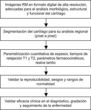 Proceso necesario para cuantificar regionalmente las variaciones en los diferentes parámetros extraíbles de las imágenes de resonancia magnética (RM) del cartílago.