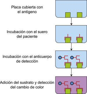 ELISA. La placa de 96 pozos se recubre con antígenos específico, los cuales son reconocidos por los anticuerpos presentes en los sueros de los pacientes. La unión se revela cuando se adiciona un anticuerpo anti-Fc humana conjugado con una enzima. Al agregar el sustrato de la enzima cambia de color el medio.