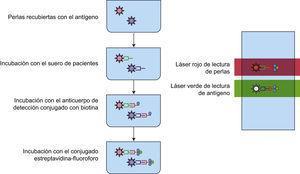 Ensayo luminométrico múltiple. Las microesferas recubiertas con antígenos específicos son reconocidas por los anticuerpos presentes en el suero de pacientes. La interacción antígeno-anticuerpo se revela por la formación de un complejo anticuerpo anti-Fc humana-estreptavidina-PE el cual al pasar por el detector del equipo de luminometría es excitado por un láser que pasa por 2 filtros: uno de 635nm, que permite discriminar entre perlas y otro de 488nm, que permite cuantificar la intensidad media de fluorescencia, es decir, la unión de los anticuerpos del paciente al antígeno.