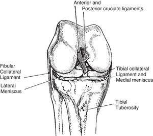 Internal rotation of the tibia is limited by the twisting of the cruciate ligaments.