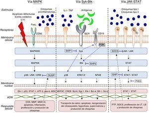 Diagrama de las vías de señalización intracelular: MAPK, Syk-Btk y JAK-STAT.