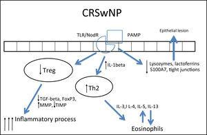 Specific response to chronic rhinosinusitis with nasal polyps (CRSwNP). After stimulation of innate immunity, polarized adaptive response to Th2 occurs and Treg response decreases. As a result, the response is primarily eosinophilic and exacerbated, resulting in edema.