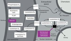 Eicosanoid pathway leading to leukotriene formation.