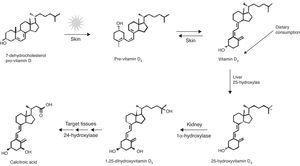 Síntesis de vitamina D. Tomada de: Dusso et al.24.