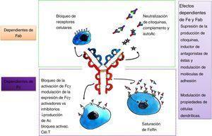 Esquema sobre los mecanismos de acción de las inmunoglobulinas.