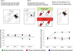 Abordaje traslacional del proceso de reconsolidación de memorias en una población de pacientes con fobia a las arañas. En el día 1, se mide el nivel de miedo basal y de acercamiento-proximidad de los pacientes frente a las arañas (cuanto están dispuestos a interactuar con ellas). En el día 2, los sujetos fueron reexpuestos a una araña por 3 minutos (EP) y, a continuación, se les administró una cápsula de propranolol (40mg) o placebo por única vez. En los días 5, 9, 16 y los meses subsiguientes (9 y 12), los pacientes completaron un cuestionario de fobia a las arañas y realizaron el test de acercamiento comportamental a las arañas. Como se observa, solo el grupo con reactivación seguida de propranolol muestra una disminución sostenida en los puntajes del cuestionario de fobia a las arañas y un acercamiento máximo a ellas (incluso con interacción manual con el animal). Fuente: Adaptada de Soeter y Kindt64.