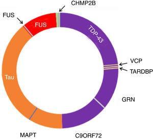 Neuropatología y genética en DFTvc. El espectro de las DFTvc se ha dividido en subtipos neuropatológicos según color y causas genéticas en letras negras fuera del círculo. DFT-TDP en púrpura, aproximadamente el 50% de casos. DFT-tau en naranja, aproximadamente 40%. DFT-FUS en rojo, menos de un 10% de casos. El resto, en verde, presenta DFT-UPS negativa para tau, TDP-43 y FUS. Mutaciones MAPT, C9ORF72 y GRN son las causas más comunes de las DFT genéticas. MAPT vinculadas a patología tau. C9ORF72 y GRN vinculadas a patología TDP-43, al igual que mutaciones en TARDBP y VCP. Mutaciones FUS causan patología FUS, mientras que las CHMP2B provocan FTD-UPS. Modificada de Roberson110.