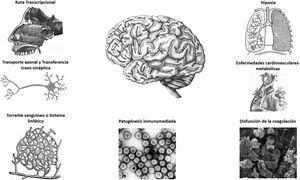 Neuropatogenia del SARS-CoV-2 Fuente: Adaptado de Chen et al.2.