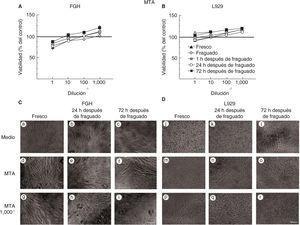 Viabilidad de fibroblastos gingivales humanos (FGH; panel A) y fibroblastos de ratón de la línea celular L929 (panel B) después de la exposición a MTA. Los símbolos representan: cemento fresco (triángulo negro), fraguado (cruz blanca), a 1h (cuadrado tachado), a las 24h (círculo blanco) y a las 72h de fraguado (cuadrado negro). El 100% de viabilidad celular representa la condición sin cemento (línea negra en 100%). Los datos representan el promedio del porcentaje de viabilidad celular de tres experimentos independientes, realizados por triplicado. Microfotografías de FGH (panel C) y L929 (panel D) expuestos a medio, al medio condicionado de MTA concentrado y a una dilución del medio condicionado de MTA 1/1,000. Escala 100μm.