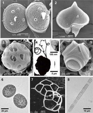 Especies de varios grupos taxonómicos de fitoplancton marino. Microscopía de luz (ML), microscopía electrónica de barrido (MEB) y microscopía electrónica de transmisión (MET). 1, Minidiscus comicus, una diatomea, MEB. 2, Protoperidinium depressum, un dinoflagelado, MEB. 3, Gephyrocapsa oceanica, un cocolitofórido, MEB. 4, Chrysochromulina sp., una Haptophyta, con una escama orgánica externa (recuadro), MET. 5, Tetraparma insecta, Parmophyceae, MEB. 6, Fibrocapsa japonica, una Raphydophyceae, ML. 7, Dictyocha californica, un silicoflagelado, MEB. 8, Trichodesmium thiebautii, una Cyanobacteria, ML.