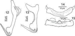 Drawings of Haliotrematoides spinatus from Lutjanus guttatus found in Chamela Bay, Jalisco and Mazatlán, Sinaloa, Mexico. 12, dorsal anchor; 13, ventral anchor; 14, dorsal bar; 15, ventral bar. All measurements are in micrometers.