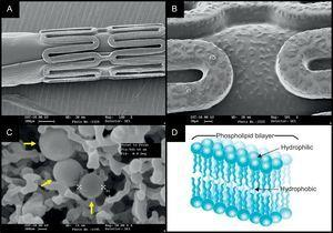 The nanocarrier-based FOCUS np sirolimus-eluting stent. The scanning electron microscopy (SEM) images of the crimped stent (A) and the magnified surface of the strut and balloon (B) coated with encapsulated sirolimus (C, yellow arrows). The nanocarrier consists of a lipid bilayer with a hydrophilic head and two lipophilic/hydrophobic tails (D), and the drug is released on pH change.