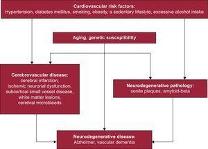 Relationship between cardiovascular disease and neurodegenerative disease.
