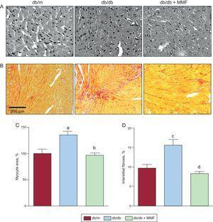 Effects of MMF on diabetic cardiomyopathy in db/db mice. Mycophenolate mofetil attenuates hypertrophy and fibrosis of myocytes in db/db mice. Representative images of hematoxylin and eosin-stained cardiac tissues (A) and Sirius red-stained interstitial areas (B). Quantification of cardiomyocyte cross-sectional area (C) and percentage of interstitial (D) areas in the graph. Data were analyzed by 1-way ANOVA with Newman-Keuls post-hoc testing and expressed as mean ± SE (n ≥ 15 per group). MMF, mycophenolate mofetil. aP < 0.001 vs db/m. bP < 0.001 vs db/db. cP < 0.01 vs db/m. dP < 0.01 vs db/db.