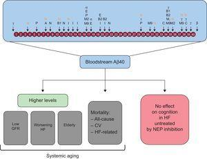 Amyloid-beta can be processed by numerous proteases. Bloodstream Aβ40 may indicate systemic aging, but it is not associated with cognitive decline in HF. A, angiotensin-converting enzyme; α, α-secretase; Aβ40, amyloid-beta 1-40 peptide; B, β-site amyloid precursor protein-cleaving enzyme; β, β-secretase; B1, β-site amyloid-β-protein precursor cleaving enzyme 1; B2, β-site amyloid-β-protein precursor cleaving enzyme 2; C, cathepsin B; CV, cardiovascular; E, endothelin-converting enzyme-1 and -2; GFR, glomerular filtration rate; HF, heart failure; I, insulin-degrading enzyme; M2, matrix metalloprotease-2; M9, matrix metalloprotease; N, neprilysin; NEP, neprilysin; P, plasmin; γ, γ-secretase.