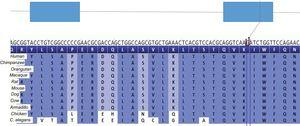Graphic representation of the p-Arg142Cys mutation in NKX2-5. Nucleotide sequence and protein sequence, showing their conservation.