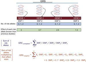 Calculation of unweighted and weighted GRSs. GRS, genetic risk score; SNP, single-nucleotide polymorphism.