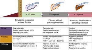 Natural history of Fontan-associated liver disease. The temporal sequence is illustrative because the timeline depends on the course of the heart disease. Arrhythmias or ventricular dysfunction can accelerate the clinical course. ALT, alanine transaminase; AST, aspartate aminotransferase; GGT, gamma-glutamyl transpeptidase.