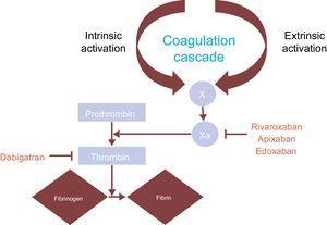 Mechanism of action of nonvitamin K oral anticoagulants.