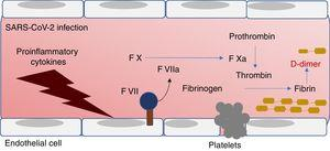 Representation of the coagulation process. Coagulation factors and D-dimer as markers in COVID-19. TF, tissue factor.