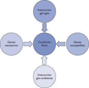 Interacción de los diferentes elementos en la condición física.