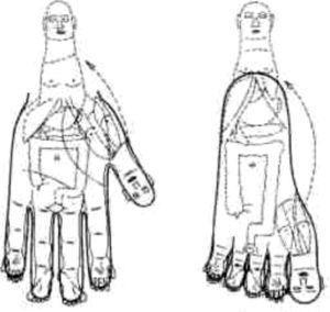 Zonas de correspondencia corporal de manos y pies.