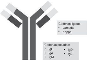 Proteinograma obtenido por electroforesis en gel de agarosa.