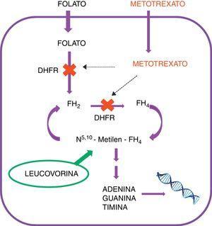 Acción metabólica del metotrexato y de la leucovorina.