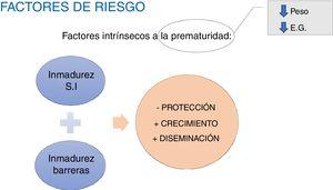 Factores intrínsecos a la prematuridad en los neonatos pretérmino. E.G.: edad gestacional; S.I.: Sistema inmune.
