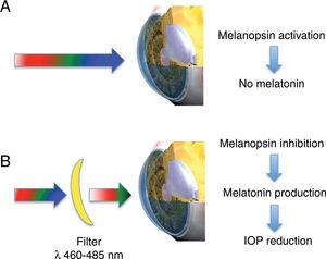 Light-mediated effect on the lens. (A) White light, and in particular its blue component, stimulates the melanopsin receptor blocking the local synthesis of melatonin in the lens. (B) When a filter eliminating blue light component (λ 460–485nm) is used, melanopsin is not stimulated and the local synthesis of melatonin in the human lens epithelium occurs. Since melatonin is released to the aqueous humour, this substance can act on melatonin receptors present in the ciliary body reducing intraocular pressure.