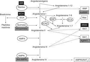 Esquema actual del sistema renina angiotensina incluyendo los nuevos componentes y las posibilidades de actuación farmacológica. Ag RAT2: agonista del receptor AT2&#59; AMPA y AMPN: aminopeptidasa A y N&#59; AMPRI: aminopeptidasa regulada por insulina&#59; Ant AMPN: equal&#59;antagonista de Aminopeptidasa N&#59; Ant RRP: antagonista del receptor de renina/prorrenina&#59; ARAII: antagonista del receptor AT1&#59; ECA: enzima conversiva de Angiotensina&#59; ENP: endopeptidasa&#59; Mas: Oncogén Mas&#59; IECA: inhibidor de la enzima conversiva de angiotensina&#59; IDR: inhibidor directo de la renina&#59; Inh quimasa: inhibidores de la quimasa. RAT1 y RAT2: receptores de la angiotensina II&#59; RAT4: receptor de la angiotensina IV&#59; RRP: receptor de renina/prorrenina. (Con fondo negro posibilidades terapéuticas actuales, con fondo gris posibilidades futuras).