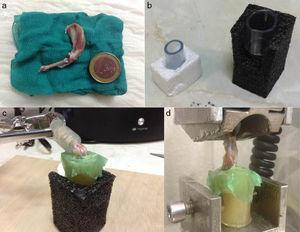 Preparation method of the samples for the biomechanical study: (a) anatomical specimen; (b) plastic tubes; (c) both ends of the limb covered in pieces of plastic using a resin; (d) positioning of the specimen in the traction machine.