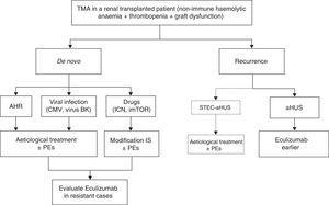 Treatment for thrombotic microangiopathy in renal transplantation. CMV: cytomegalovirus&#59; CNI: calcineurin inhibitors&#59; mTORi: mTOR inhibitors (mammalian target of Rapamycin)&#59; IS: immunosuppression&#59; TMA: thrombotic microangiopathy&#59; AHR: acute humoral rejection&#59; PE: plasma exchange&#59; HUS: haemolytic uraemic syndrome&#59; aHUS: atypical haemolytic uraemic syndrome&#59; STEC: Shiga toxin-producing Escherichia coli. a STEC-HUS recurrence following renal transplantation is very rare.