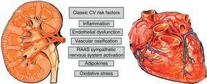 CVR factors involved in renal and cardiac impairment.