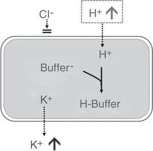 Effect of hyperchloremic acidosis on serum potassium concentration. Source: Modified from Santi et al.35 Transcellular shift of potassium driven by the entry of H+ into the cell where it is neutralized by intracellular buffers.