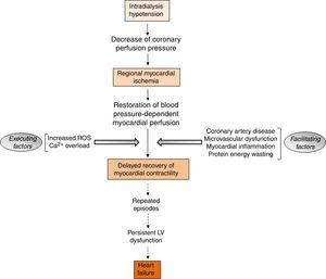 Sequence of events involved in the pathogenesis of myocardial stunning in patients submitted to hemodialysis (ROS, reactive oxygen species; Ca2+, calcium; LV, left ventricular).