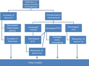 Diagram of the known causes that implicate phosphorus as a cause of fracture.