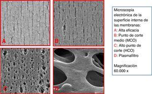 Electron microscopy of the inner surface of different types of membrane.