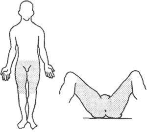 "Concept of ""expanded perineum"" by Kusminsky."