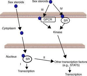 Cell signaling by sex steroids. Estrogens and androgens can signal through multiple receptors. Most of their known effects are mediated via direct interaction of sex steroids with the DNA-binding transcription factors, nuclear steroid receptor, SR (ER, AR) (I). In addition, estrogens and androgens can modulate gene expression by a second mechanism in which SR interact with other transcription factors (e.g., STAT5) (II). There are also evidences that sex steroids may also elicit effects through non-genomic mechanisms, which involve the activation of downstream kinase pathways via a G protein-coupled receptor (GPCR) (III) or SR (IV) localized in the cell membrane.