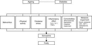 Pathophysiology of the relationship between diabetes and frailty (based on Refs. 29 and 74). GH, growth hormone; IGF, insulin-like growth factor; IL, interleukin; TNF, tumor necrosis factor; Vit., vitamin.