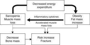 Genesis of sarcopenic obesity and its impact on bone metabolism.
