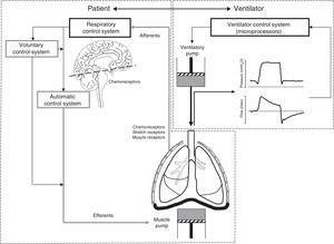 Principles of patient–ventilator interaction. Assisted ventilation has the difficult task of harmonizing the operation of two complex systems, i.e., patient and ventilator–each with its own control center and ventilatory pump. The respiratory control system (RCS) is complex, and is composed of an automatic system and a voluntary system. The afferents transmit the stimuli from the sensors (central and peripheral chemoreceptors, stretch receptors and muscle receptors) to the control system, regulating the neural respiratory impulse. The automatic control system emits the efferents (motor neurons) that activate and regulate the muscle pump. The voluntary system in turn can modulate the activity of the automatic system or directly activate the muscle pump.