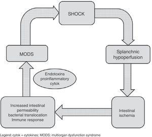 Schematic representation of the relationship between shock and splanchnic hypoperfusion. cytok: cytokines; MODS: multiorgan dysfunction syndrome.